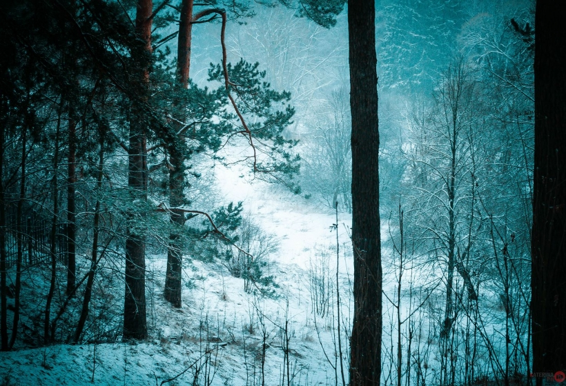 зимний мосальск
