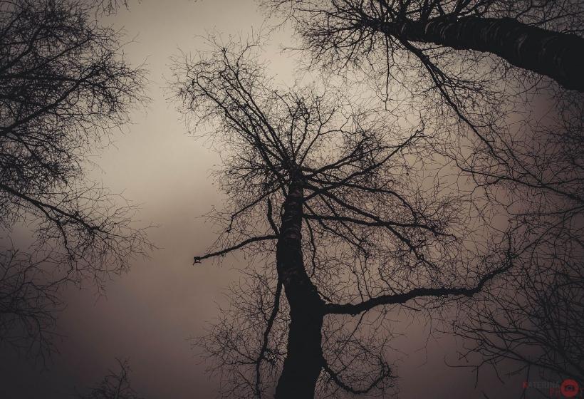 хмурый лес